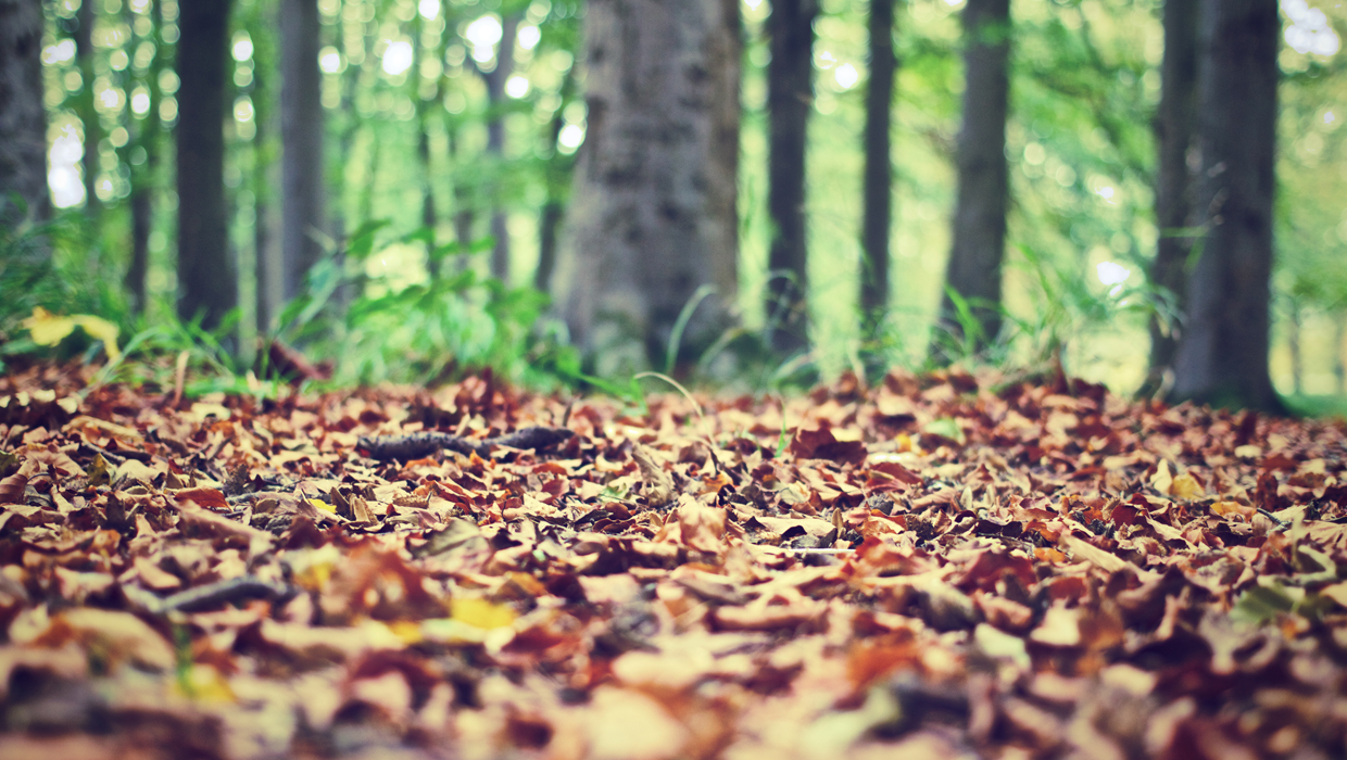nature-forest-leaves-ground-pexels-1240x700